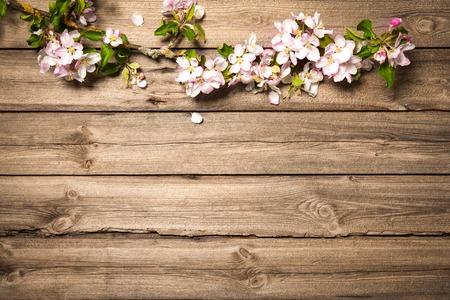 Frühling blühenden Zweig auf Holzuntergrund. Apfelblüten
