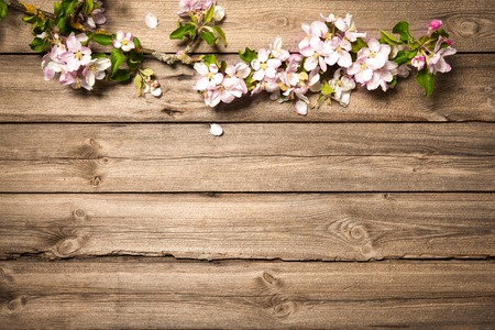 Frühling blühenden Zweig auf Holzuntergrund. Apfelblüten Lizenzfreie Bilder