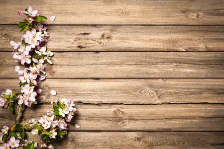 Spring flowering branch on wooden background. Apple blossoms