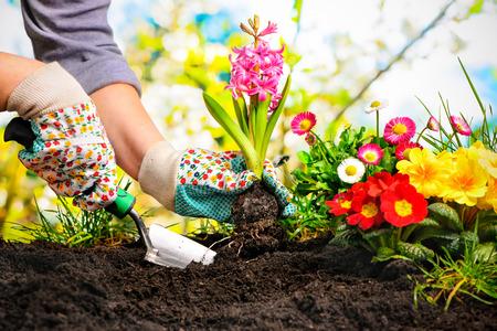 Gardeners handen planten van bloemen in achtertuin Stockfoto