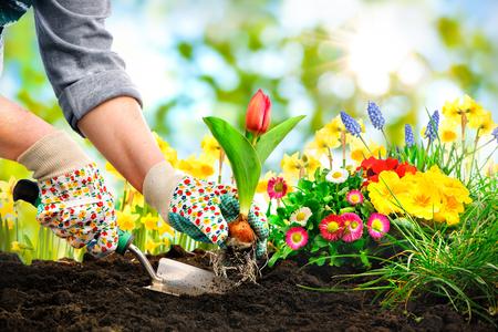 flowers: Jardiniers mains plantation des fleurs à la cour arrière Banque d'images