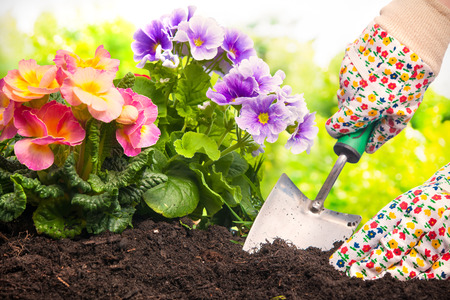 back yard: Gardeners hands planting flowers at back yard