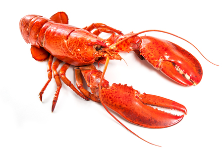 lobster isolated: Cooked lobster isolated on a white background Stock Photo