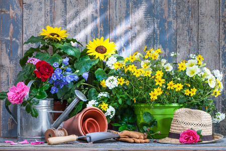 Gardening tools and flowers on the terrace in the garden 版權商用圖片 - 58717179
