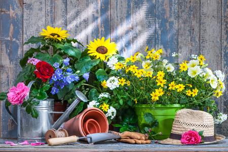 Herramientas de jardinería y flores en la terraza en el jardín Foto de archivo - 58717179