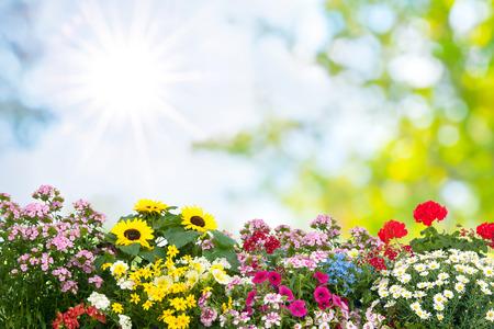 庭で夏の花背景 写真素材 - 58717211