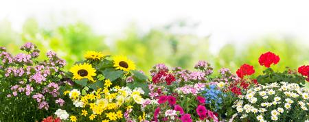 Achtergrond met de zomerbloemen in tuin Stockfoto
