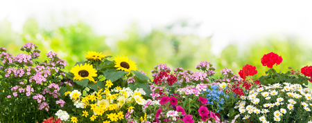 Fondo con las flores de verano en el jardín Foto de archivo - 58717230