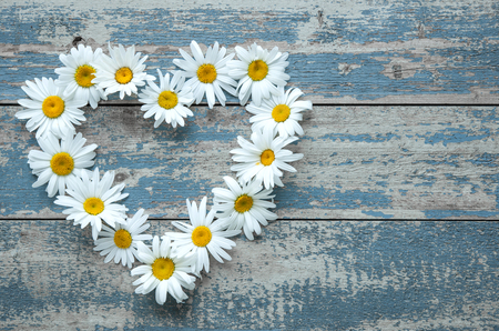 daisies: Daisy flowers in heart shape on blue painted wooden board