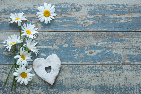 marguerite: Daisy flowers with a heart shape on old wooden background