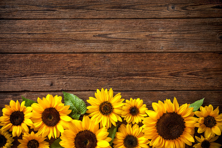 Autumn background with sunflowers on wooden board Stok Fotoğraf - 62207509