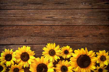 Autumn background with sunflowers on wooden board Stock Photo - 62207553