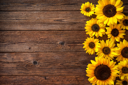 Autumn background with sunflowers on wooden board Stok Fotoğraf - 62207551