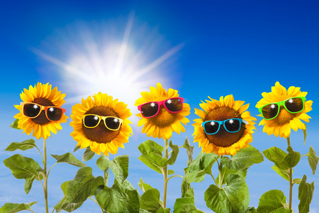 funny glasses: Sunflowers with sunglasses on blue sky background