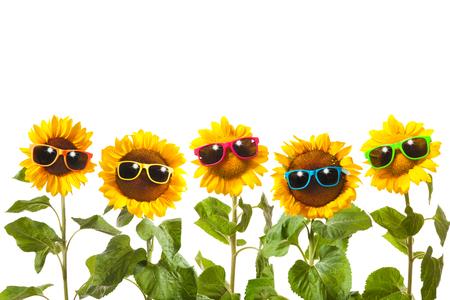 Zonnebloemen met een zonnebril op witte achtergrond