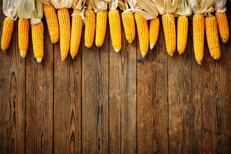 mazorca de maiz: Maíz recién cosechado en el fondo de madera rústica