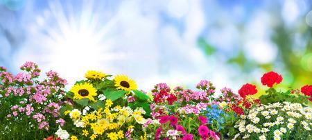 与夏天花的背景在庭院里
