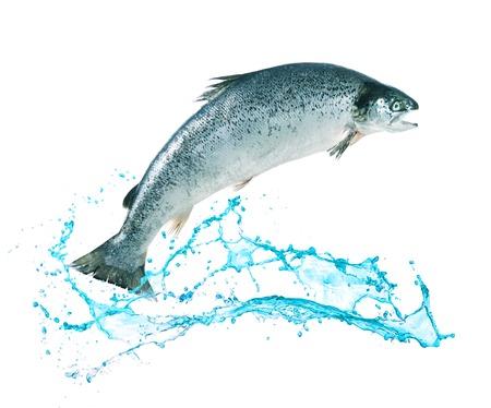 大西洋サケの魚は水の外に飛び出す