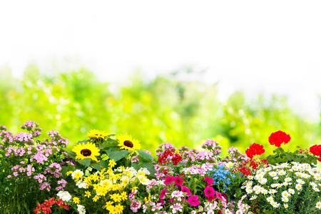 Fondo con las flores de verano en el jardín Foto de archivo - 73220490