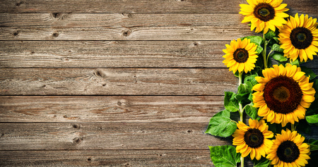 Herfst achtergrond met zonnebloemen op een houten bord Stockfoto