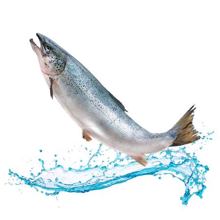 Atlantische zalmvissen springen uit water