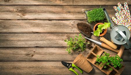 Gartengeräte, Samen und Boden auf Holztisch. Frühling im Garten