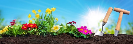 Planting flowers in sunny garden Stock Photo - 73654528