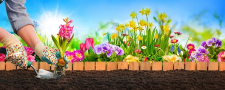 Planting flowers in sunny garden Stock Photo