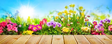 Lentebloemen in zonnige tuin