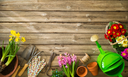 Gardening tools and flowers on wooden table