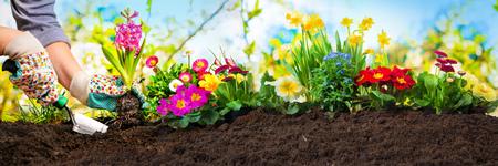 Planting flowers in sunny garden Stockfoto
