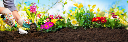 Planting flowers in sunny garden Stock Photo