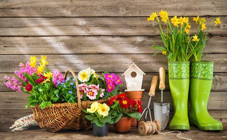 Strumenti di giardinaggio e fiori di primavera su fondo in legno Archivio Fotografico - 74154737
