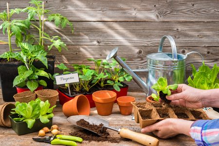 seed: Planting seedlings in greenhouse in spring Stock Photo