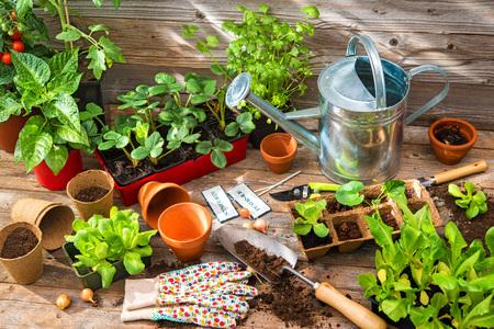 Planting seedlings in greenhouse in spring 스톡 콘텐츠