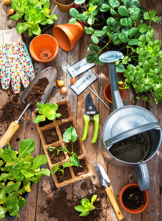 Planting seedlings in greenhouse in spring Stock Photo