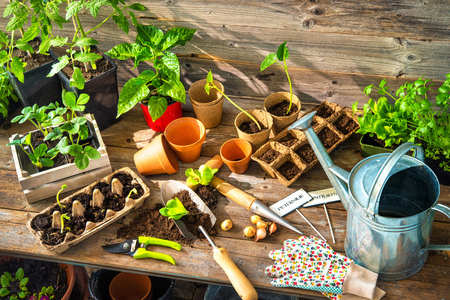 Planting seedlings in greenhouse in spring Archivio Fotografico
