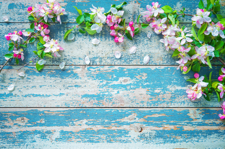 arbol de pascua: Spring blooming branches on blue wooden background. Apple blossoms Foto de archivo