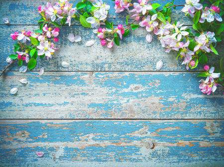 Spring blooming branches on blue wooden background. Apple blossoms Imagens