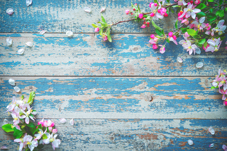 Spring blooming branches on blue wooden background. Apple blossoms Stock Photo