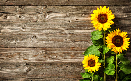 Autumn background with sunflowers on wooden board Banco de Imagens - 80125683