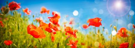 양 귀 비 꽃 필드입니다. 자연 봄 배경과 푸른 하늘 위로 양 귀 비 피. 빨간색 야생화와 농촌 풍경
