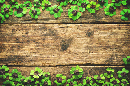 lucky charm: Clover leaves on the old wooden background. Lucky shamrock. St.Patricks day background with copyspace for text