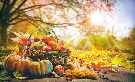 Thanksgiving pumpkins and falling leaves on rustic wooden plank in autumn garden
