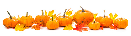 Autumn decoration arranged with dry leaves and pumpkins isolated on white background, wide format