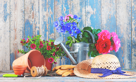 Gardening tools and flowers on the terrace in the garden 版權商用圖片