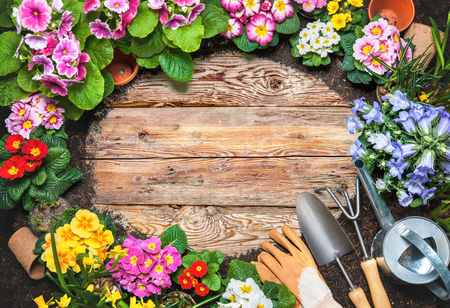 Frame of spring flower and gardening tools on old wooden background 写真素材 - 96255006