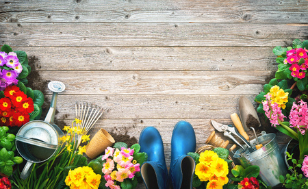 Gardening tools and spring flowers on the terrace in the garden Banco de Imagens