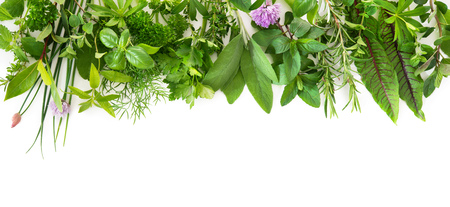 Various kinds of fresh garden herbs isolated on white background Stock Photo