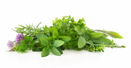 Various kinds of fresh garden herbs isolated on white background 免版税图像